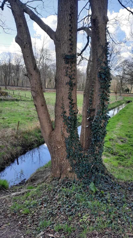 Bewolking tussen de boom door (Foto: _UserName_)