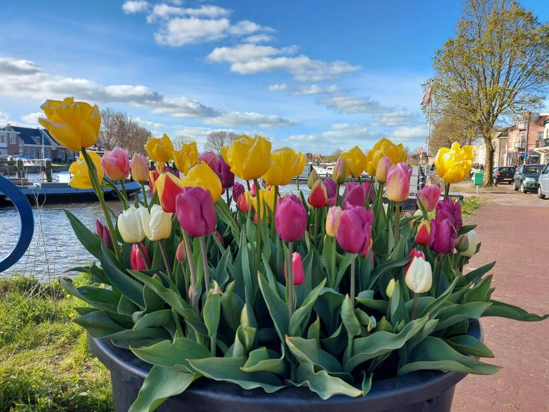 Fraaie tulpen en een boot (Foto: Pukeko)