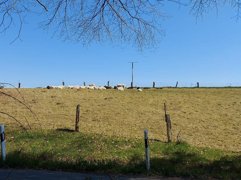 Schaapjes in de zonnige buitenlucht (Foto: qltel)