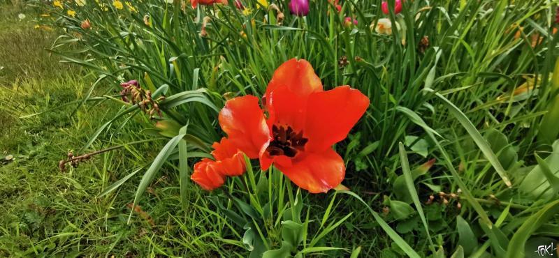 Een prachtige bloem in het veld (Foto: FOK!)