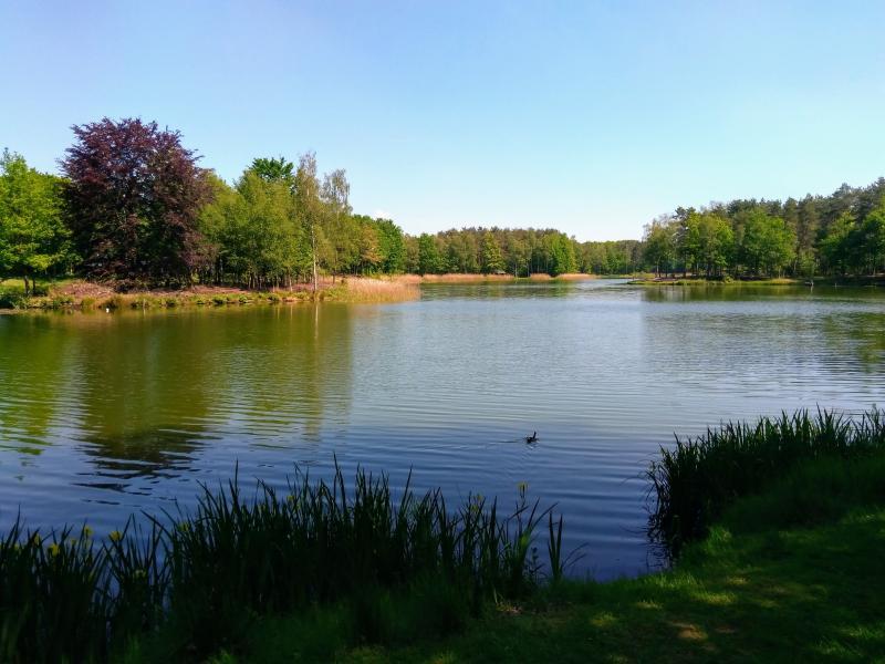 Kroonvense Heide (Foto: Kroezel)