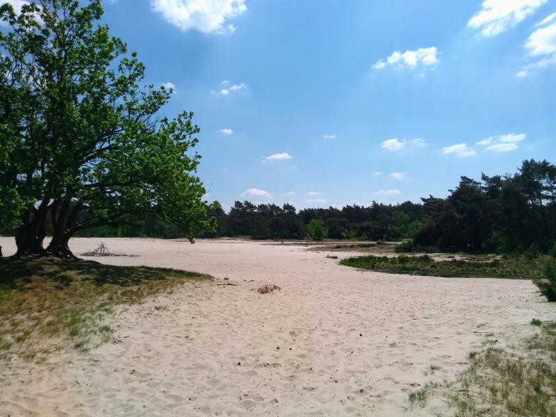 Warm met een klein wolkje in de Loose duinen (Foto: Kroezel)