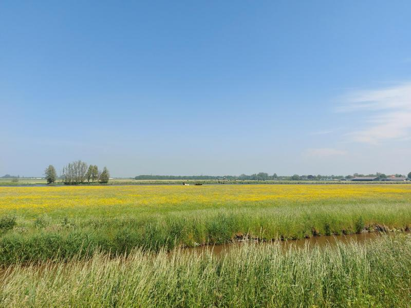 Het Wormer- en Ilperveld, waar Pukeko afgelopen week te vinden was (Foto: Pukeko)
