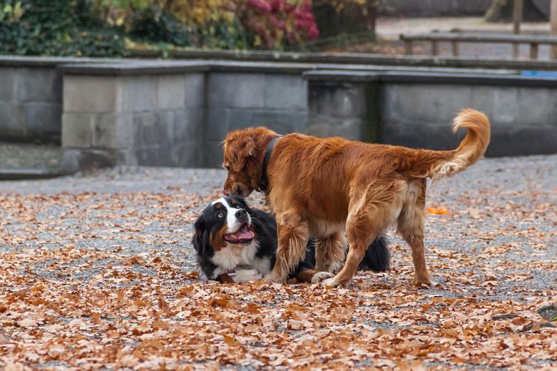 Het nutteloze feitje van de dag: kassa dankzij honden (WikiCommons/Ximeg)