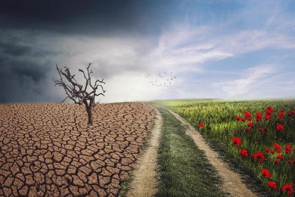Milieucriminaliteit brengt langdurige schade aan in ons leefklimaat (foto:Pixabay)