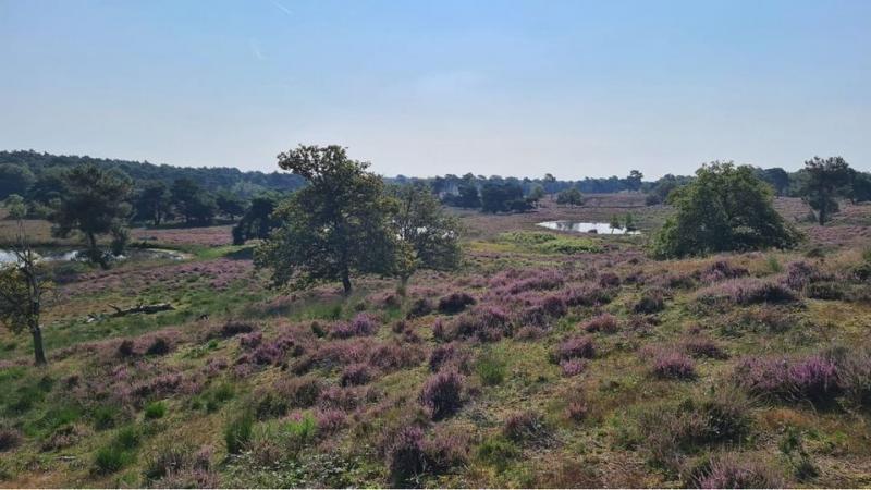 De heidevelden bij Rafferden (Foto: Charged)